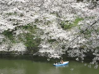 IMG_8063 chidorigafuchi.JPG